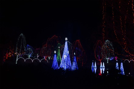 Wild Lights at the Columbus Zoo